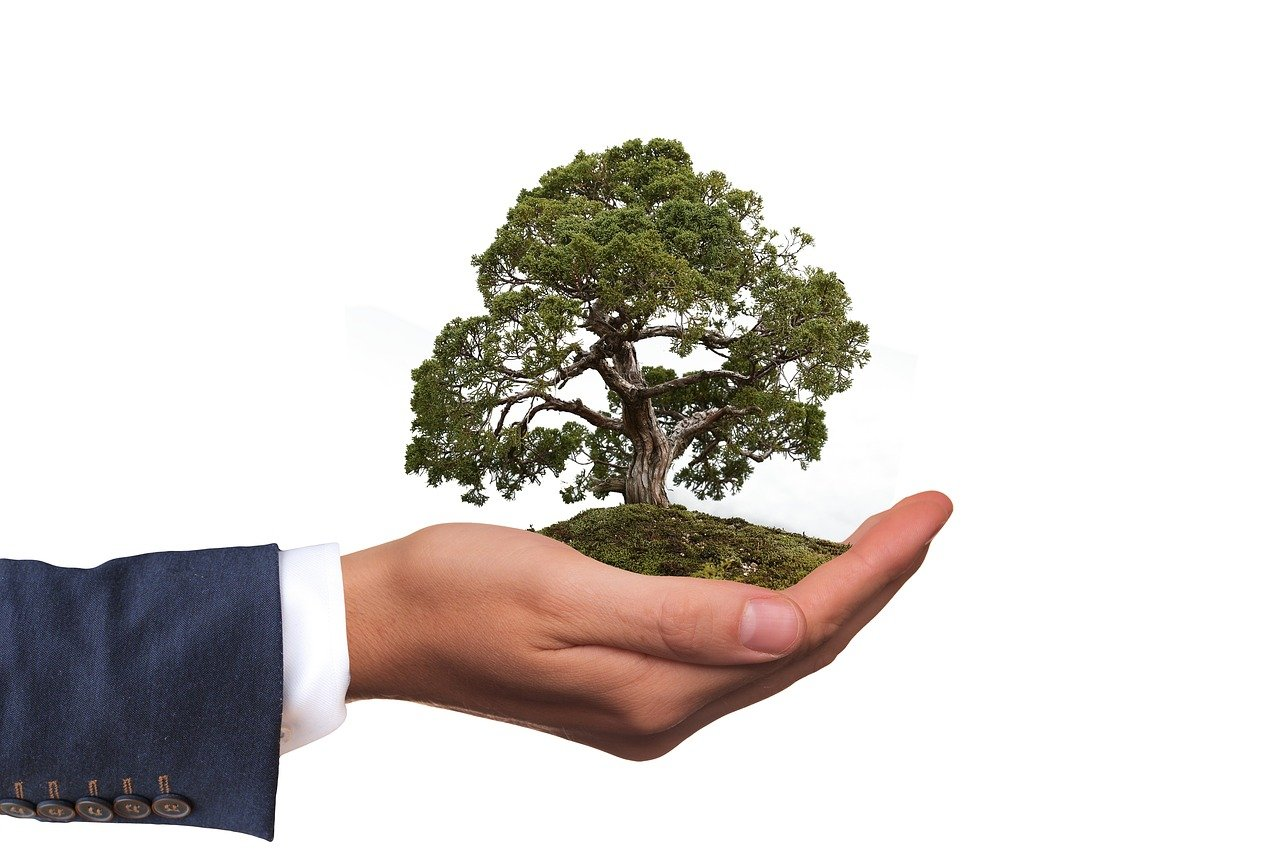 A plant in a hand.