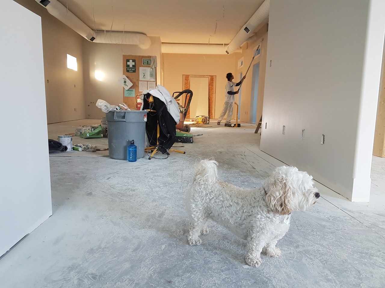 A poodle standing in an area undergoing remodeling - storage options for home renovation